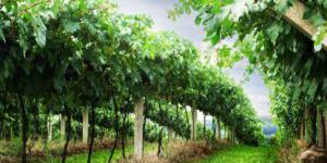 Quatro vinhos portugueses entre os melhores de 2013