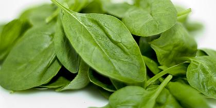 Espinafres ajudam a emagrecer e a controlar apetite